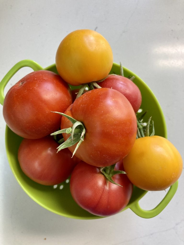 tomatoes grown in new mexico